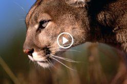 Apple lanza el nuevo sistema operativo OS X Mountain Lion