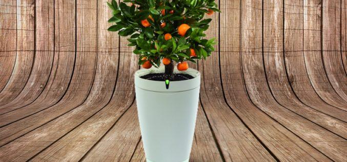 AFtech presenta el nuevo dispositivo inteligente para plantas: la maceta Parrot POT